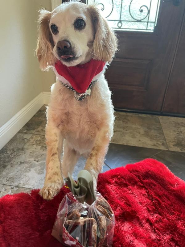 Food Coach Expert - Christmas Cranberry Dog Treats
